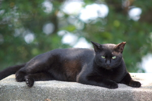 夏の野良猫とハス
