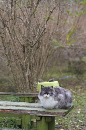 花の駅のネコ