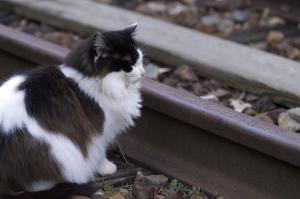 続・花の駅のネコ