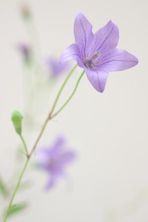 久々、花Blog