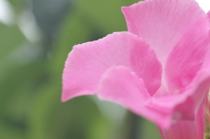 呉基地と花と