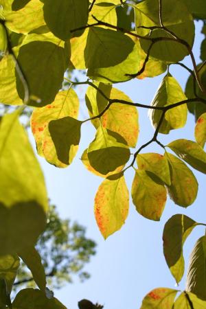 平和公園の秋