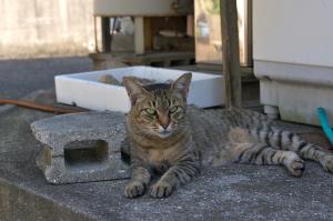 下津井のネコ