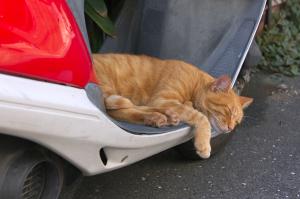 野良猫、睡魔・睡魔・睡魔