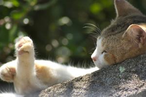 猫の道・おのみち