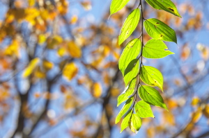 今日の秋色