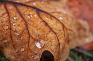秋の思ひで
