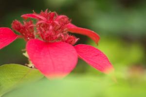 夏の花Photo