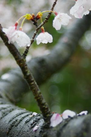 雨の湧永庭園
