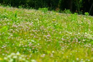 花みどり公園で