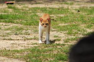 呉の野良猫ストーリー