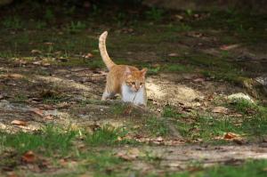 呉の野良猫ストーリー2