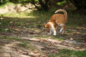 呉の野良猫ストーリー完結編+α