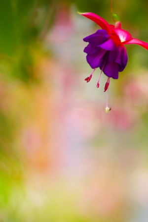 リスと花と