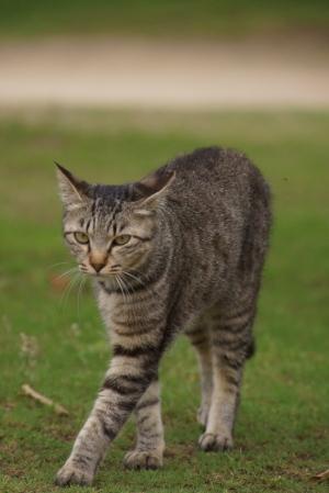 野良猫INおのみち