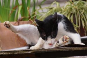 8月の猫とか