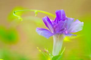 久々の花マクロ