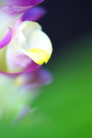 優勝への応援花