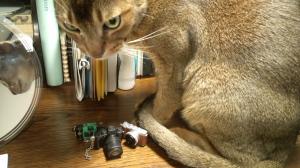 野良猫特集