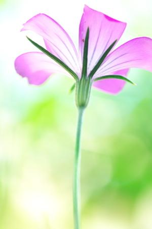 撮りたい花マクロ
