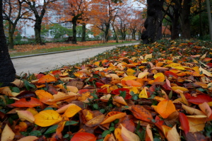 秋のいろいろ撮影集