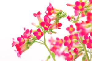 復活の花集