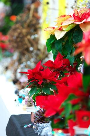 クリスマスを飾るフラワー展