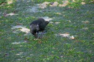 宮島の野鳥とか