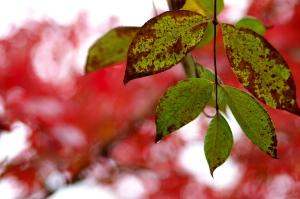 秋の雨上がり