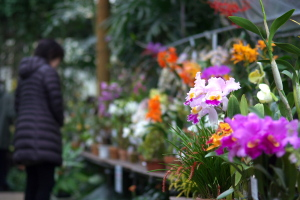 今日の西風梅園と植物公園
