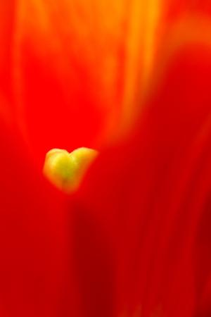 紅い花びら