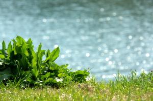 広島の川と桜と
