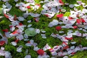 春の落し物