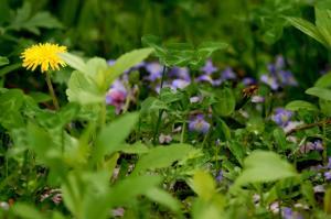 続・花のまわりみち