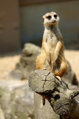 動物園の主役たち