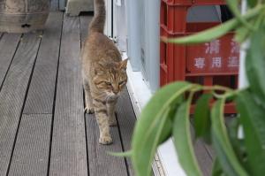 回天の島の猫