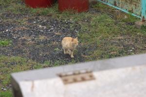 続・回天の島の猫