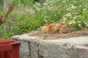 子猫と花と