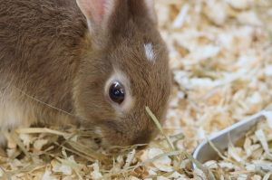 ウサギとかイグアナとか