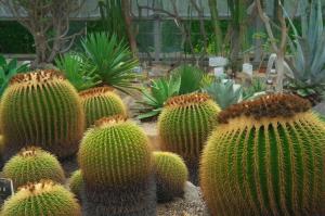 M-ROKKORの植物公園
