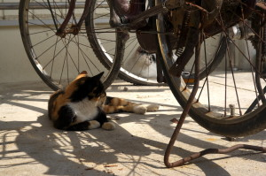 似島を自転車で