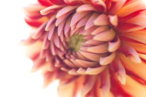花と潮風と