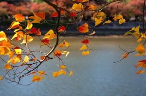 秋晴れの平和公園