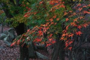 チョウと紅葉と