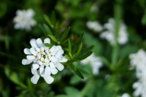 呉基地の花々