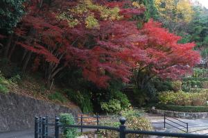 植物公園の紅葉