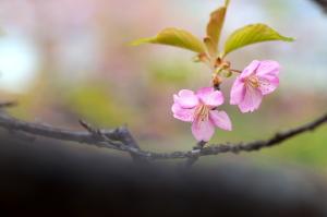 いつか春が