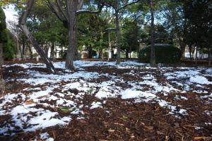 雪、降った降った