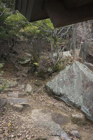 山の散策道