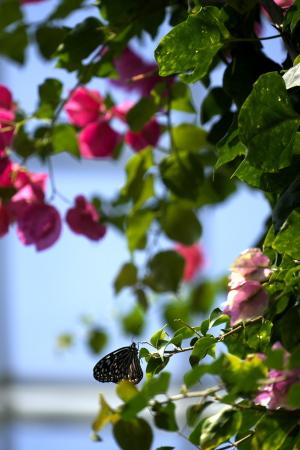 花とチョウと